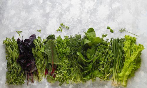 Fresh greens basil,coriander,lettuce,purple basil,mountain coria
